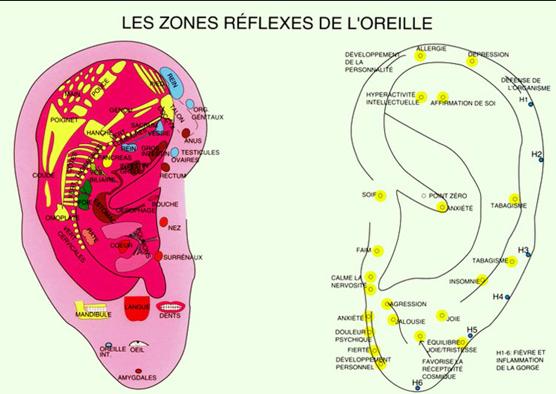 zones-reflexes-oreille-auriculotherapie